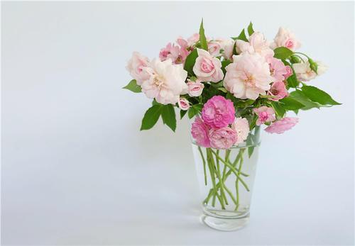 花店鲜切花保养的方式很重要